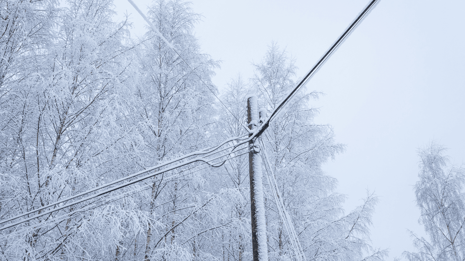 Power lines and snowy trees